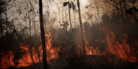 Brazil readies but does not deploy thousands of troops to combat Amazon fires